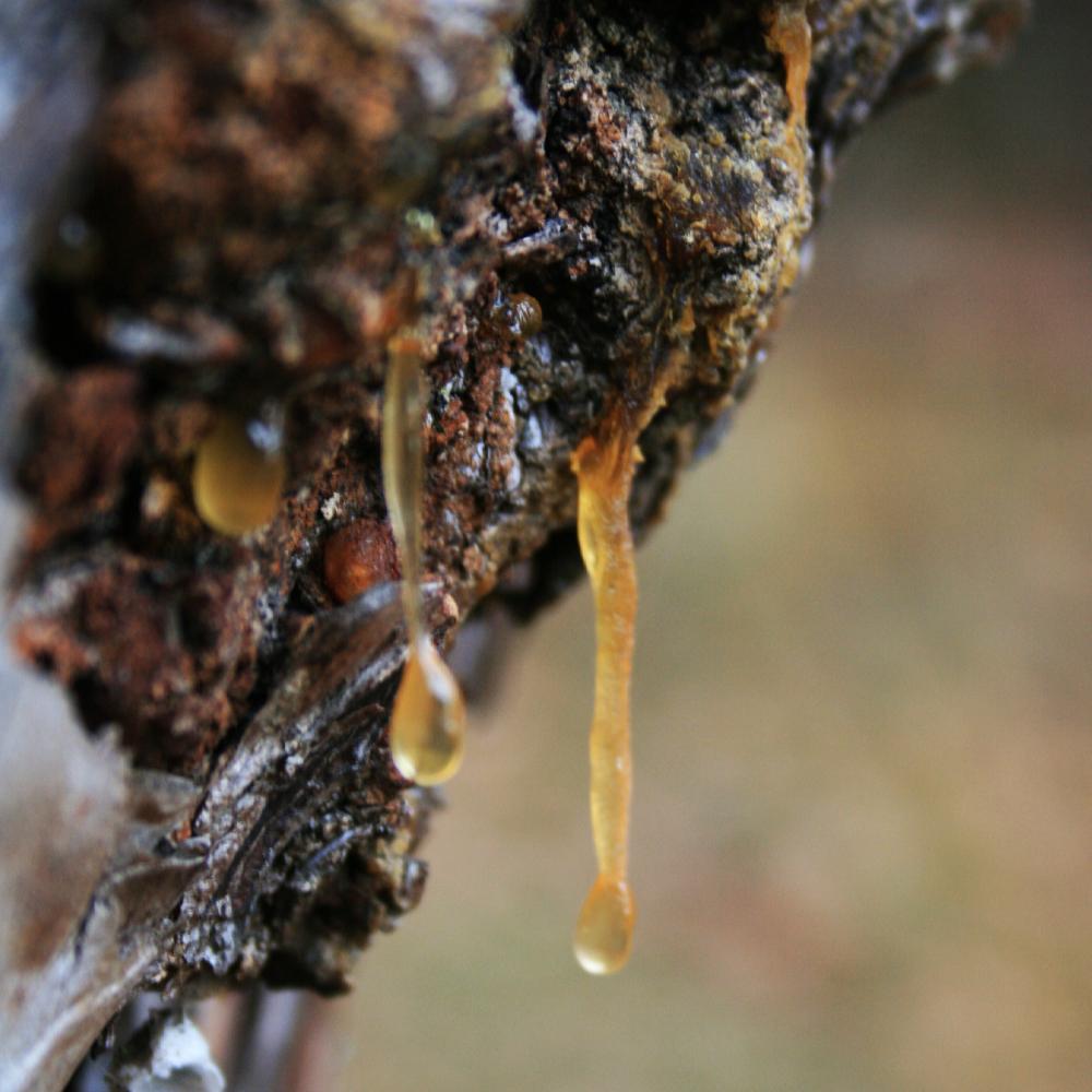 Reflection man amouage geurengoeroe - Deksel van de boom ...