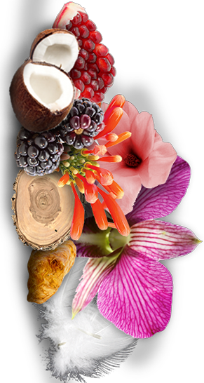 HEAT WILD ORCHID BEYONCE INGREDIENTS