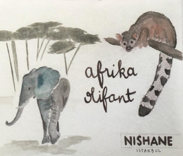 AFRIKA OLIFANT NISHANE 1