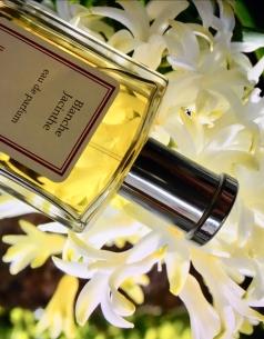 hyacint-1.jpg